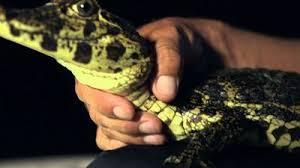 Seeking Lizard Imdb Fish Where To Every Episode Reelgood