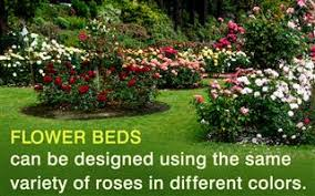 flower garden layout design ideas that u0027ll make your neighbors jealous