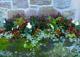 Winter Container Garden Ideas 5 Easy Containers For Stunning Winter Colour Shrub Gardens And