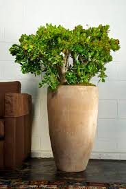 Indoor Planter Pots by 549 Best Grow Inside Images On Pinterest Plants Gardening And