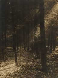 josef sudek 1896 u2013 1976 forest glade galerie arcimboldo