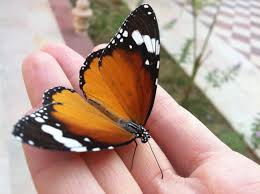 spreading my wings at butterfly fort lauderdale my