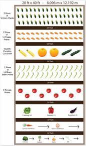 growing corn in your home garden
