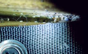 Bed Bugs What To Do Pmps What To Do When Bed Bugs Return Pest Management Professional