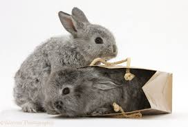 rabbit care all about rabbits rescue