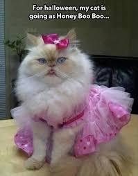 Cat Suit Meme - simple 28 cat suit meme wallpaper site wallpaper site