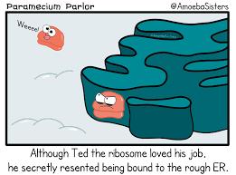 Science Memes - science memes album on imgur