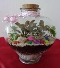 terrariums agaperium