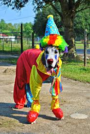 clown costumes for halloween 14 best dog halloween costumes of 2014