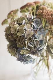 Dried Hydrangeas Decorating With Dried Flowers How To Dry Flowers And Infuse Them