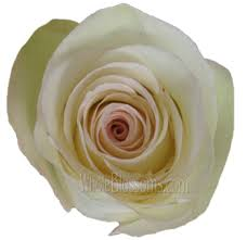 White Roses For Sale Organic Flowers Wholesale Organic Roses For Sale Online Buy
