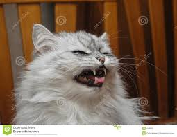evil cat red persian stock photo image 41788308