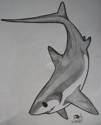 29 best shark tattoo drawings images on pinterest sharks