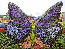 butterfly topiary epcot flower and garden festival 2016 in