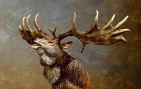 the irish elk roaringwater journal