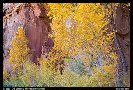 picture photo trees in fall foliage against sandstone cliff
