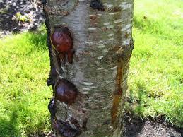 tree photos album 4 photographs of trees pruning cutting bark
