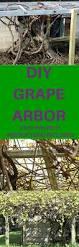 107 best grape arbors images on pinterest grape vines garden