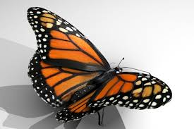 monarch butterfly 3d model page