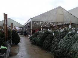astonishing lowes tree shop ge ft