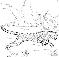 coloring pages animals running cheetah coloring page cheetah