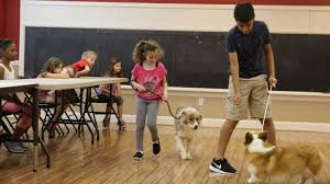 triple h australian shepherds triple h helps area kids learn to take care of dogs local news