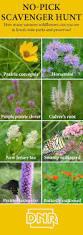 best native plants 24 best native iowa plants images on pinterest native plants