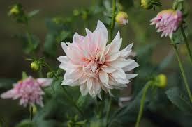farm fresh flowers flower farm n fresh flowers