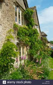 old quaint country cottage with climbing plants on trellis in