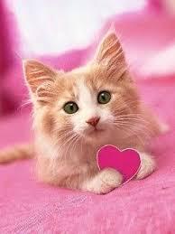 wallpaper cat whatsapp cute cats profile pictures cats profile pictures for facebook