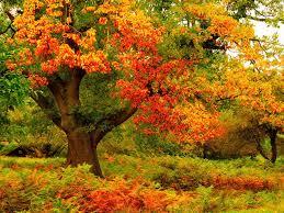 beautiful nature wallpapers beautiful trees my free wallpapers hub