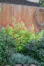 Herb Garden Idea 10 Beautiful Herb Garden Designs Sunset Magazine