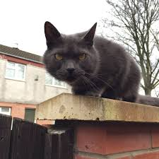 postman cat thepostmancat twitter