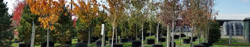 premier trees offering a selection of high quality grafted
