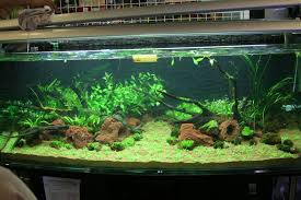 Aquascape Layout Yihzy Com Blog Archive Aquascaping Workshop
