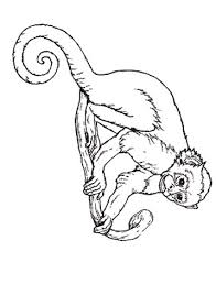umbrella coloring monkey