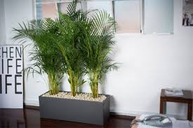 plant for office office plants ambius new zealand