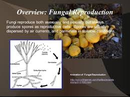 reproduction of microorganisms ppt video online download