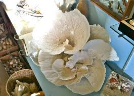 kdh design diary how to decorate with sea shells tips tricks