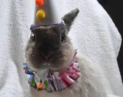 Hamster Halloween Costumes Clown Costume Etsy