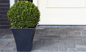 Topiary Planters - two topiary buxus balls groupon goods