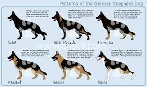 belgian shepherd size german shepherd patterns by mausergirl on deviantart