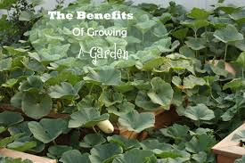 growing a garden healthy ideas for kids