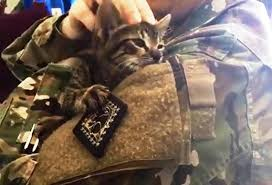 guantánamo has a feral cat problem operation git meow to the