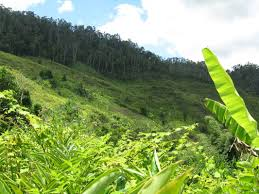 native plants in the tropical rainforest control of invasive plant species madagascar fauna and flora group