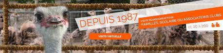 plumeau en plume d autruche élevage autruche à montmachoux plumes d u0027autruche et œufs d