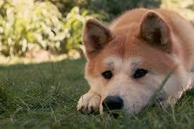 Meme Generator Doge - sad doge blank template imgflip