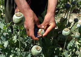 Opium Us War In Afghanistan Is Fueling Global Heroin Epidemic U0026 Enabling