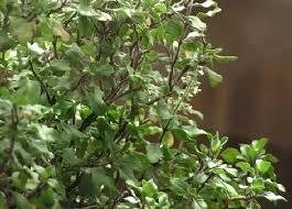 plante de bureau feng shui plante de bureau feng shui comment amacnager un bureau feng shui