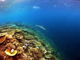 w maldives marine insider